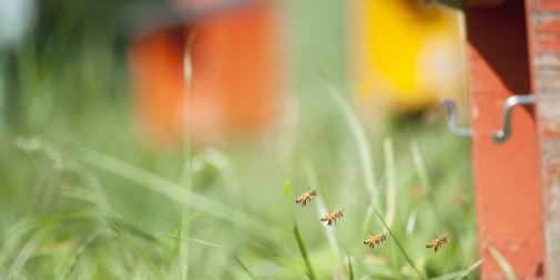 BEE LIFE SUPPORT