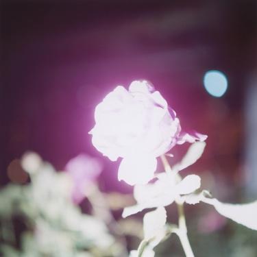 A story to tell_#1 Rinko Kawauchi