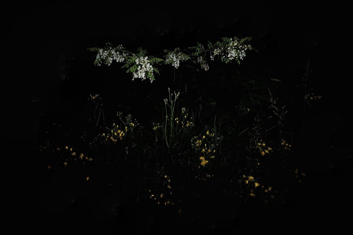Da lassù, la tua preziosa veglia muta le mie lacrime in gocce d'oro che luminose segnano il passo nel buio del cammino che rimane.  Dolores Izquierda