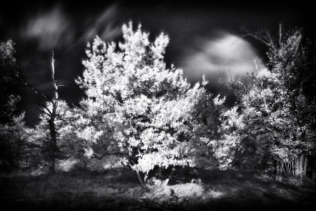 La natura è luce