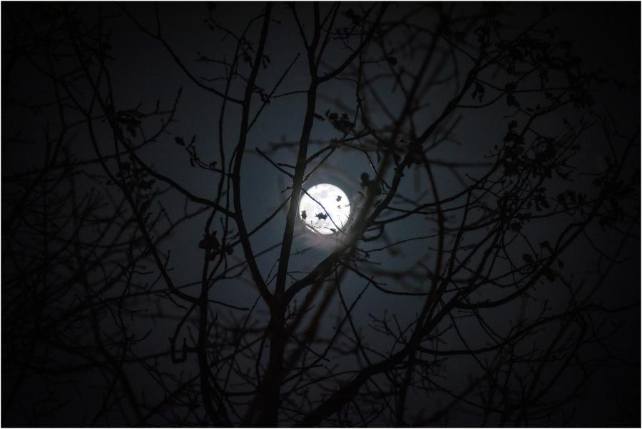 La luna e la quercia - Pescosolido - Parco Nazionale d'Abruzzo - Versante Laziale © 2019 Luca Prospero www.lucaprosperophotographer.com